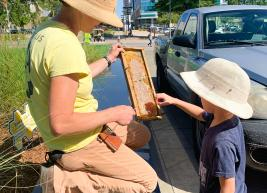 Our bee keeper, Alice Hinman, shows a child the queen bee in one of the frames from the hive