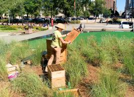 Our bee keeper, Alice Hinman, analyzes a portion of the bee hive in the garden at the Duke Energy Center